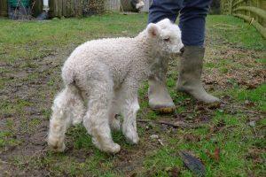 Storm the lamb 4