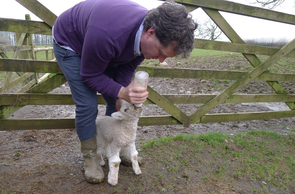 Storm the lamb is being bottle fed!