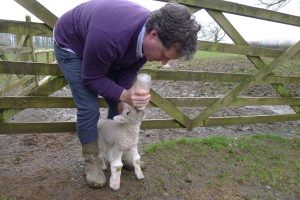 storm the lamb and jim 5
