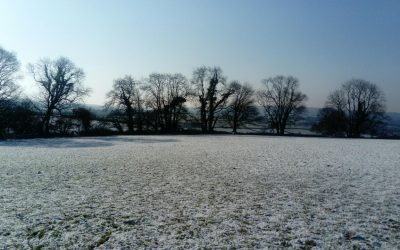 Snow in mid March!